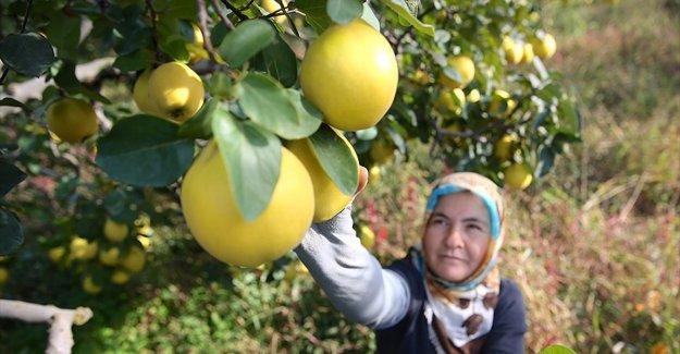 'Tarımın geleceği çiftçi kadınlarımızda'