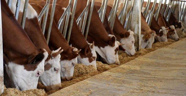 TKDK modern tarım ve hayvancılığa öncülük ediyor