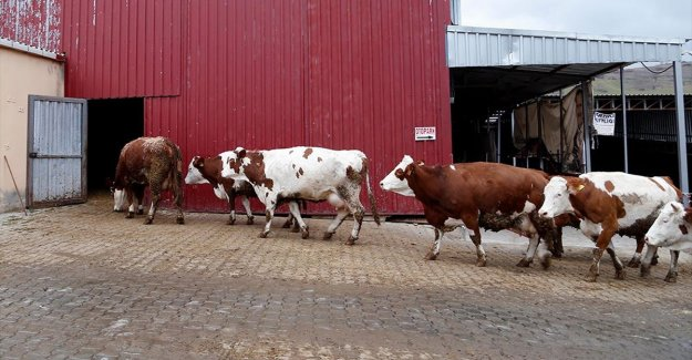 Geçen yıl en çok süt üreten il Konya oldu
