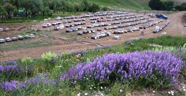 Karadeniz'in göçer arıcıları kaliteli bal için Ağrı'nın dağlarını mesken tuttu