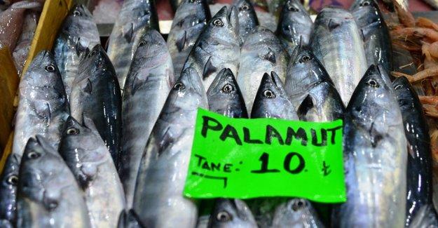 'Denizin kırmızı etli balığı' palamut 10 liradan tezgahlarda