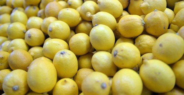 Limon ihracatında ön izin şartının kaldırılması üreticiyi sevindirdi