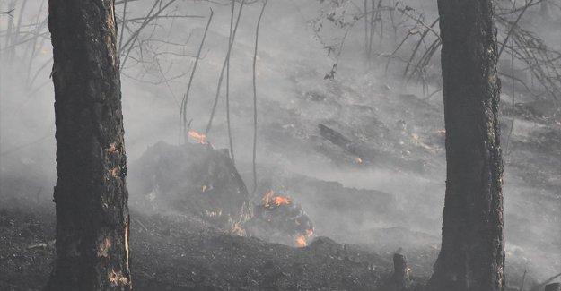 Bakan Pakdemirli: Bugün başlayan 11 orman yangınının 10'unu kontrol altına aldık