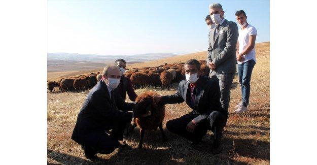 """Bayburt'ta """"Köyümde Yaşamak İçin Bir Sürü Neden Projesi""""nde çiftçilere koyun dağıtıldı"""