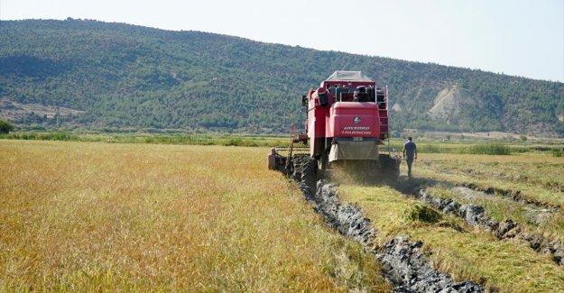 Gıda enflasyonuyla sözleşmeli üretim ve nöbetleşe ekimle mücadele