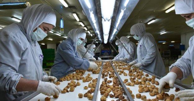 Kuru incirde 1,5 ayda 70 milyon dolarlık ihracat