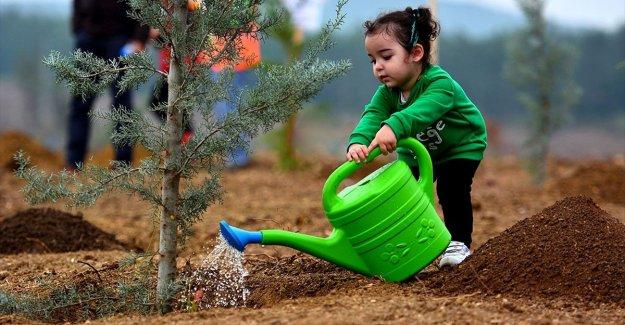 2023'e kadar Türkiye genelinde 1,6 milyar fidan toprakla buluşacak