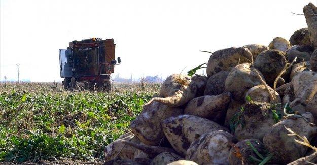 Bakan Pakdemirli: Pancar ve şeker üretiminde tüm zamanların rekoru kırıldı