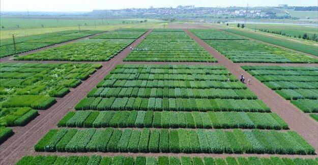 TAGEM'den tarımsal Ar-Ge projelerine 100 milyon liralık destek