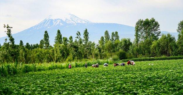 Tarım ve Orman Bakanlığından kadın üreticilere pozitif ayrımcılık