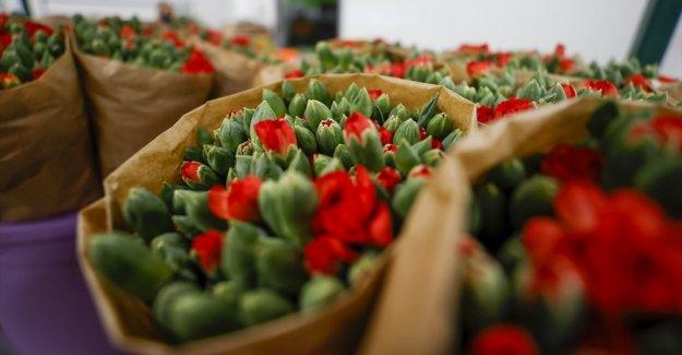 Çiçek sektörü 4,5 ayda yaklaşık 44 milyon dolarlık ihracat yaptı