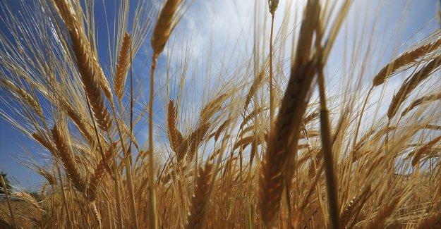 Tarım sezonunun yaşandığı son 8 aylık dönemde yağışlar yüzde 27 azaldı