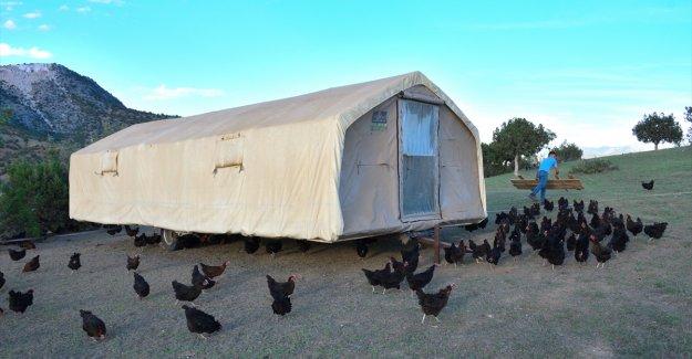 """Tavuklarını """"gezen kümes"""" ile yaylaya çıkaran üretici yumurta talebine yetişemiyor"""