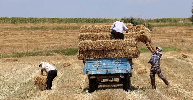 Trakya çiftçisi bayramda da üretime devam etti