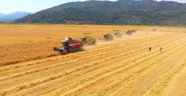 TÜRİB tarımsal ürün endekslerinde işlem hacmi 7,6 milyar lirayı geçti