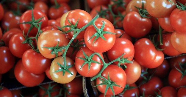 Türkiye'nin yaş meyve sebze ihracatı 3 milyar doları aşarak rekora imza attı