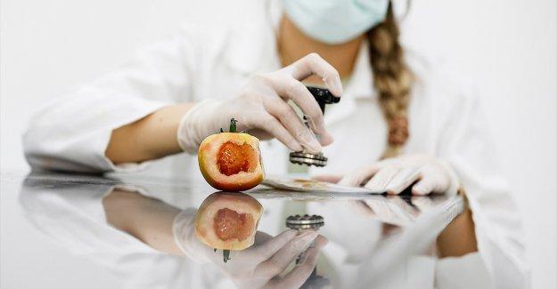 Domates üretimini olumsuz etkileyen virüse karşı dayanıklı yerli tohum geliştirildi