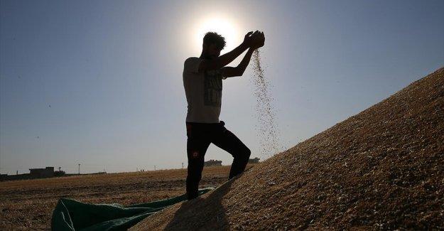 İklimsel şartlara bağlı olarak verim kaybı yaşayan hububat ve baklagil üreticilerine destek verilecek
