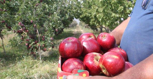 Konya'dan Asya ülkelerine elma ihracatı