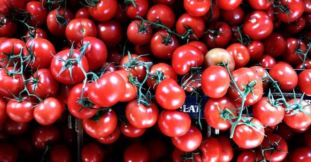 Türkiye'den 9 ayda 264 milyon 771 bin dolarlık domates ihracatı