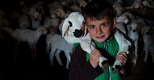 Konya'da üreticinin ağılında 'mart' bereketi