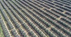 Çiftçilere 200 milyon metrekare Hazine...