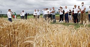 """Tescillenen yerli ve milli ekmeklik buğday tohumu """"Kirve""""nin tanıtımı yapıldı"""