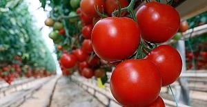 Domates ihracatçısı Rusya pazarı için kotanın artırılmasını bekliyor